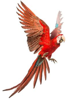 Parrot puzzle - creation.com