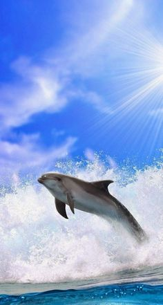 Magnificent bottlenose dolphin soaring above the sparkling seablue waters