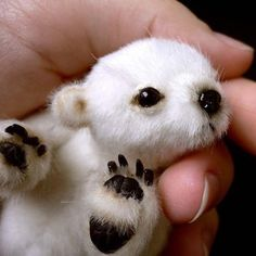 "The newborn polar bear who was all, ""Look at me. I fit in a hand."""