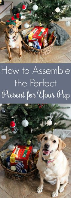 How to Assemble the Perfect Present for Your Pup  Don't forget your pets this holiday! We're sharing a simple and fun gift that you can throw together in a snap! (ad) @Walmart @PupPeroni @MilkBone @CanineCarryOuts  @MilosKitchen