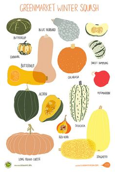 Winter Squash Print by Claudia Pearson for Greenmarket | Grow NYC