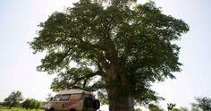 Los dos aventureros alcanzan los 6.000 kilómetros recorridos en su Volkswagen T3 Syncro y atraviesan el África más alegre.