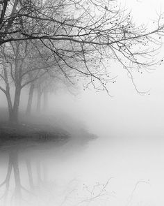 black and white photography,landscape photography, nature photography, trees in fog, winter landscape photography