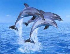 Resultado de imagen de fotografias de delfines