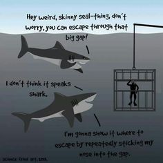 Sharks just wanting to help!