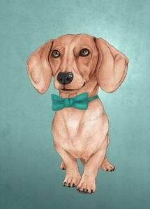 Dachshund, Posters and Prints at Art.com
