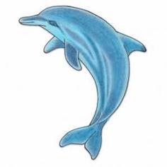 Dolphin Attractive Design