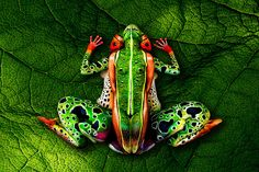 World bodypainting champion's stunning pictures: Johannes Stoetter's amazing creations on human canvas