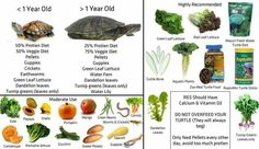 Red eared slider healthy diet!!!