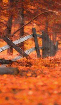 Fall in all it's crimson glory