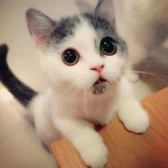 What big eyes you have <3