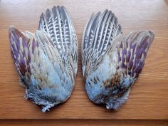 Pair Dried Cock Pheasant Wings Bird Wings Fly Tying Arts Crafts Taxidermy