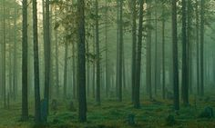 A new study has warned that Europe's forests are showing signs of reaching saturation point in their ability to absorb carbon dioxide. Description from diplomatic-corporate-services.si. I searched for this on bing.com/images