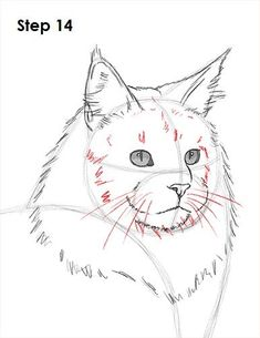 How to Draw a Maine Coon Cat #CatDrawing