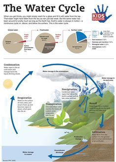 The Water Cycle (Infographic)