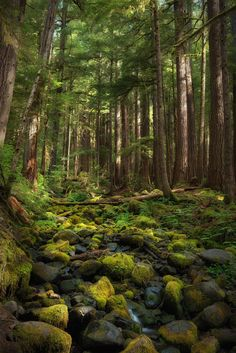 Olympic Rainforest - Washington - by Ryan Buchanan Magic Forest, Tree Forest, Beautiful Forest, Beautiful World, Olympic Rainforest, Flash Fotografia, Top Imagem, Mystical Forest, Walk In The Woods