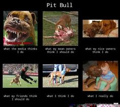 """pitbull - I like """"what my friends think I should do""""  right there with ya babies"""