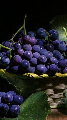 baies veloutées ... raisin d'automne ... belle récolte