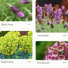 bee pit stops Bee part of it and help our furry friends out. Q Garden, Garden Pests, Dream Garden, Shade Garden, Garden Ideas, Bee Attracting Flowers, Bee Friendly, Save The Bees, Garden Supplies