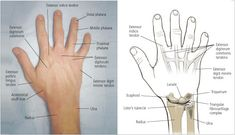 Hand and Wrist Injuries: Part I. Nonemergent Evaluation - American Family Physician