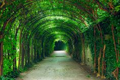 """Salzburg, trellis arches seen in Sound of Music. I want to skip through it while singing """"Do-Re-Mi""""! Dachstein Austria, Places To Travel, Places To See, Wonderful Places, Beautiful Places, Iloilo City, Just Dream, European Travel, Dream Vacations"""