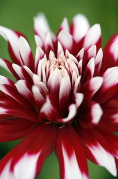 Looks like the one we planted this spring in your yard. I will always think of you and mom when I see Dahlia's