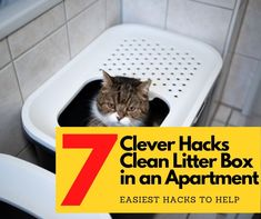 7 best hacks on how to clean a litter box in an apartment are just a few clicks away. Your kitten gets you smitten, but cleaning after him is exhausting? Bathroom Cleaning Hacks, House Cleaning Tips, Deep Cleaning, Best Cat Litter, Litter Box, Cleaning Window Tracks, Toilet Drain, Lysol Wipes, Wood Pellets