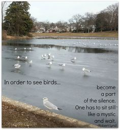 In order to see birds...become a part of the silence. One has to sit still like a mystic and wait. Robert Lynd #quote Byrd Park Richmond VA