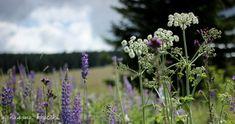 U nás na kopečku: Ježíškova cesta Czech Republic, Plants, Hampers, Plant, Bohemia, Planets