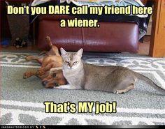 Love weiner dogs