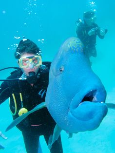 Diving in the Great Barrier Reef >>> This is definitely on my bucket list. Anyone know what kind of fish this is?