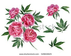 Watercolor pink peony set. Flowers for your design wedding invitations, save the date cards, fabric, wallpaper, scrapbook and etc - Shutterstock Premier