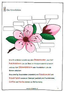 kirschbl ten fr hlingsbeginn spring romance. Black Bedroom Furniture Sets. Home Design Ideas