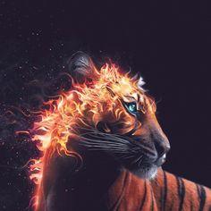 Feuertiger