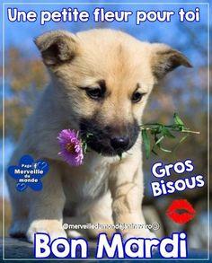 Bon Mardi, Tuesday, Digital, Dogs, Cute, Animals, Facebook, Nature, Good Night Funny