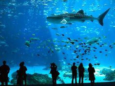 GEORGIA ~ The Georgia Aquarium. The Ocean Voyager exhibit houses whale sharks and the only giant manta rays in a U.S. aquarium. (Atlanta)