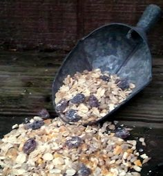 Homemade Scratch -  As an alternative to commerical scratch, you can easily mix up your own using bulk grains purchased from your feed store or local grocery store. I use a blend of cracked corn, oats, barley, wheat, flax seed, sunflower seed and raisins... and the girls love it.  Great BLOG!!