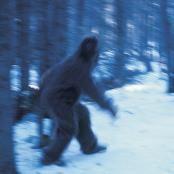File photo of Sasquatch running in snow (© Grambo Grambo/Getty Images)