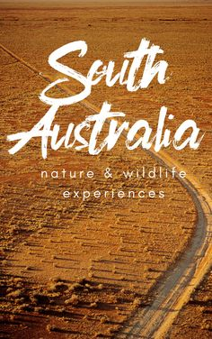 If you're after nature, beautiful national parks, and wildlife in South Australia, add these experiences to your travel bucketlist. These are things to do in South Australia for nature and wildlife! Brisbane, Melbourne, Sydney, Australia Beach, Visit Australia, South Australia, Backpacking Europe, Bora Bora, Belfast