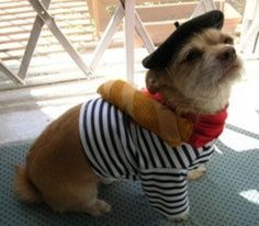 PetsLady's Pick: Cute Bastille Day Dog Of The Day ... see more at PetsLady.com ... The FUN site for Animal Lovers