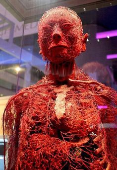 The circulatory system is pretty fucking badass...