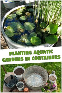 Aquatic Gardens and containers are a great match for creating outstanding displays for your pool and patio area. If you haven't read the beginning of . Water Garden Plants, Bog Plants, Container Water Gardens, Invasive Plants, Garden Soil, Types Of Plants, Garden Planters, Growing Plants, Container Gardening