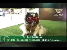 Sr. Pet Boutique Coleção Outono/Inverno 2016 - YouTube