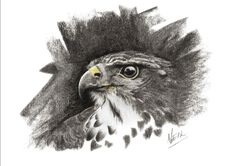Charcoal Charcoal, Sculptures, Owl, African, Bird, Animals, Animales, Animaux, Owls