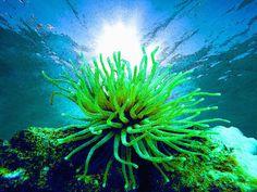 'Art of Underwaterworld     11' von Dirk h. Wendt bei artflakes.com als Poster oder Kunstdruck $16.99