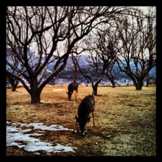 Winter deer at fort Lewis college
