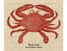 Red crab instant Digital download image  Ocean Shore Sea creature for Fabric transfer burlap paper decoupage pillows tote bags tags No. 649