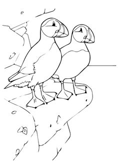 Top 10 Puffin Coloring Pages For Toddlers Animal Coloring Pages, Coloring Book Pages, Coloring Pages For Kids, Kids Coloring, Coloring Sheets, Adult Coloring, Bird Drawings, Animal Drawings, Cute Drawings