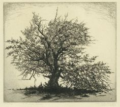 apple tree, the blighted tree, la pommier, etching 1920