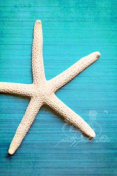 White Starfish on Turquoise Blue Background, The Sea, Abstract Photo, Pretty Tones, Beach Art, Fine Art Photograph . 5x7 Print. $15.00, via Etsy.